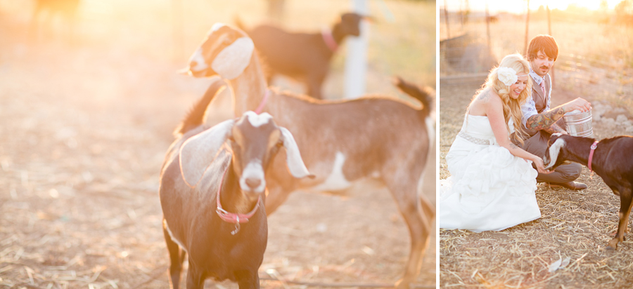 ranch wedding, bride and groom farm animals, fine art wedding portraits, gorgeous bride and groom, paso robles wedding, central coast wedding photographer, southern california fine art wedding photographer, vintage wedding, western themed wedding, victorian themed wedding, ranch wedding, farm wedding, fine art wedding photography, fine art wedding photographer, photography similar to jose villa
